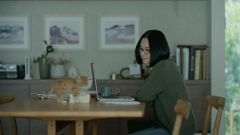 深津絵里-ダイワハウスCM--ここで、一緒に-猫