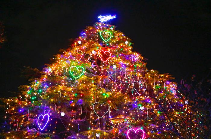 中山競馬場クリスマスイルミネーション点灯式2015-クリスマスツリー