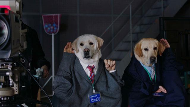 犬・日清紡のCM