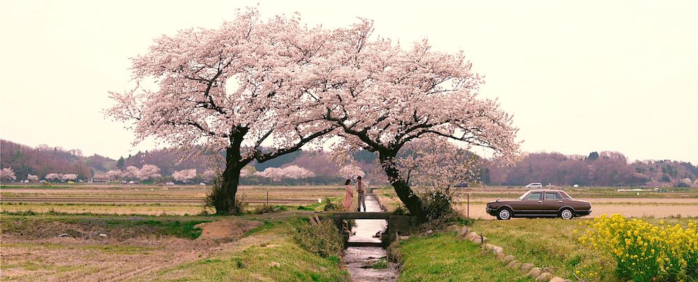 景勝地「布目の夫婦桜」