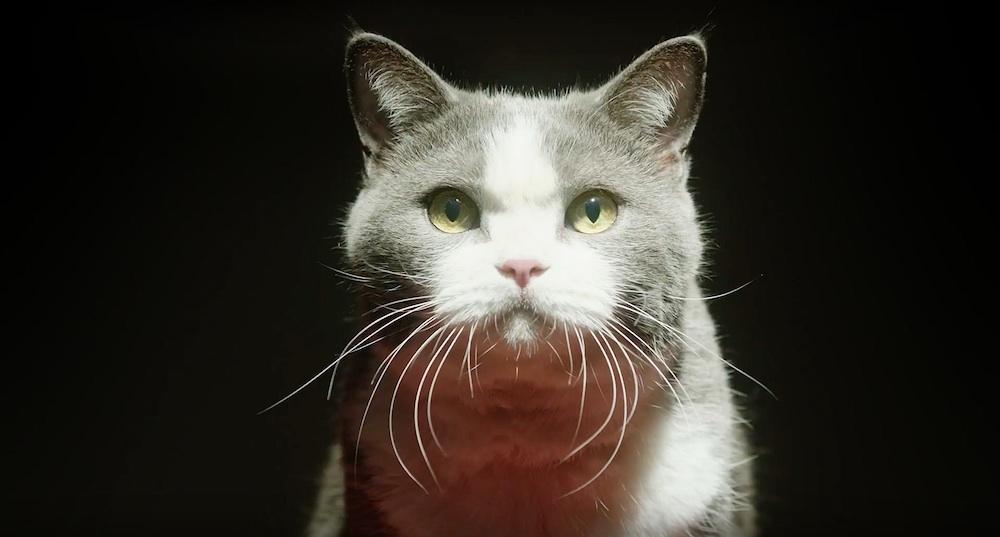 猫(ネコ)・アイペット損害保険・CM