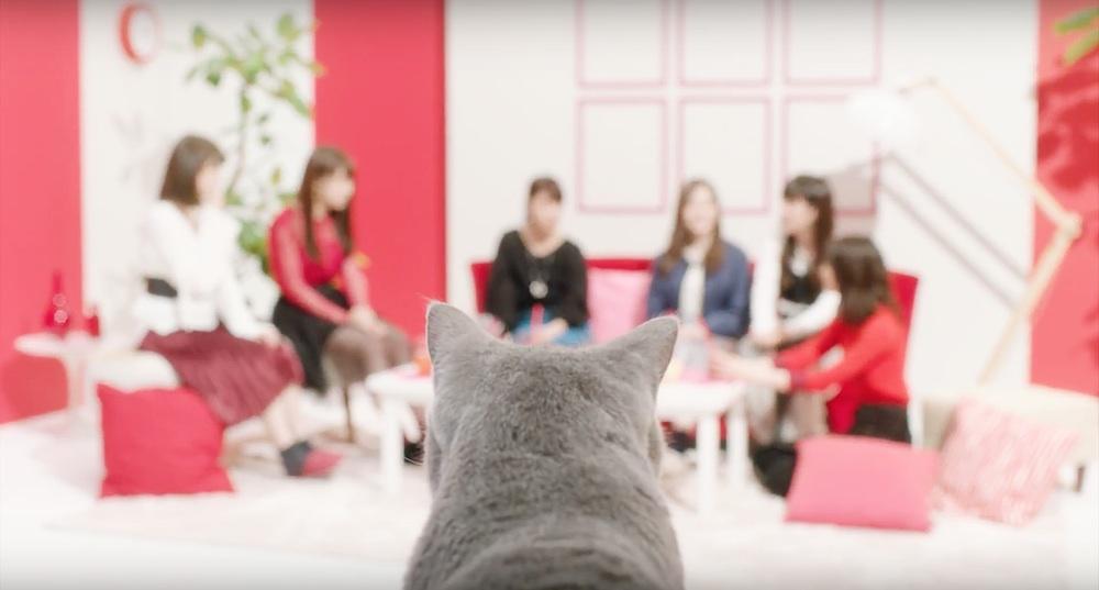 乃木坂46出演・アイペット損害保険・CM