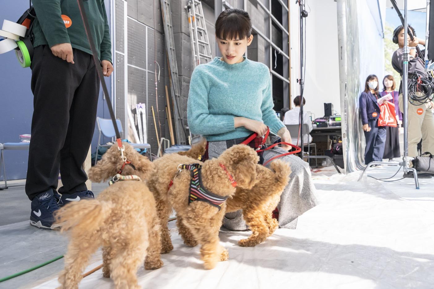 綾瀬はるか(女優)DOG(犬)/コカ・コーラCM 2019年1月