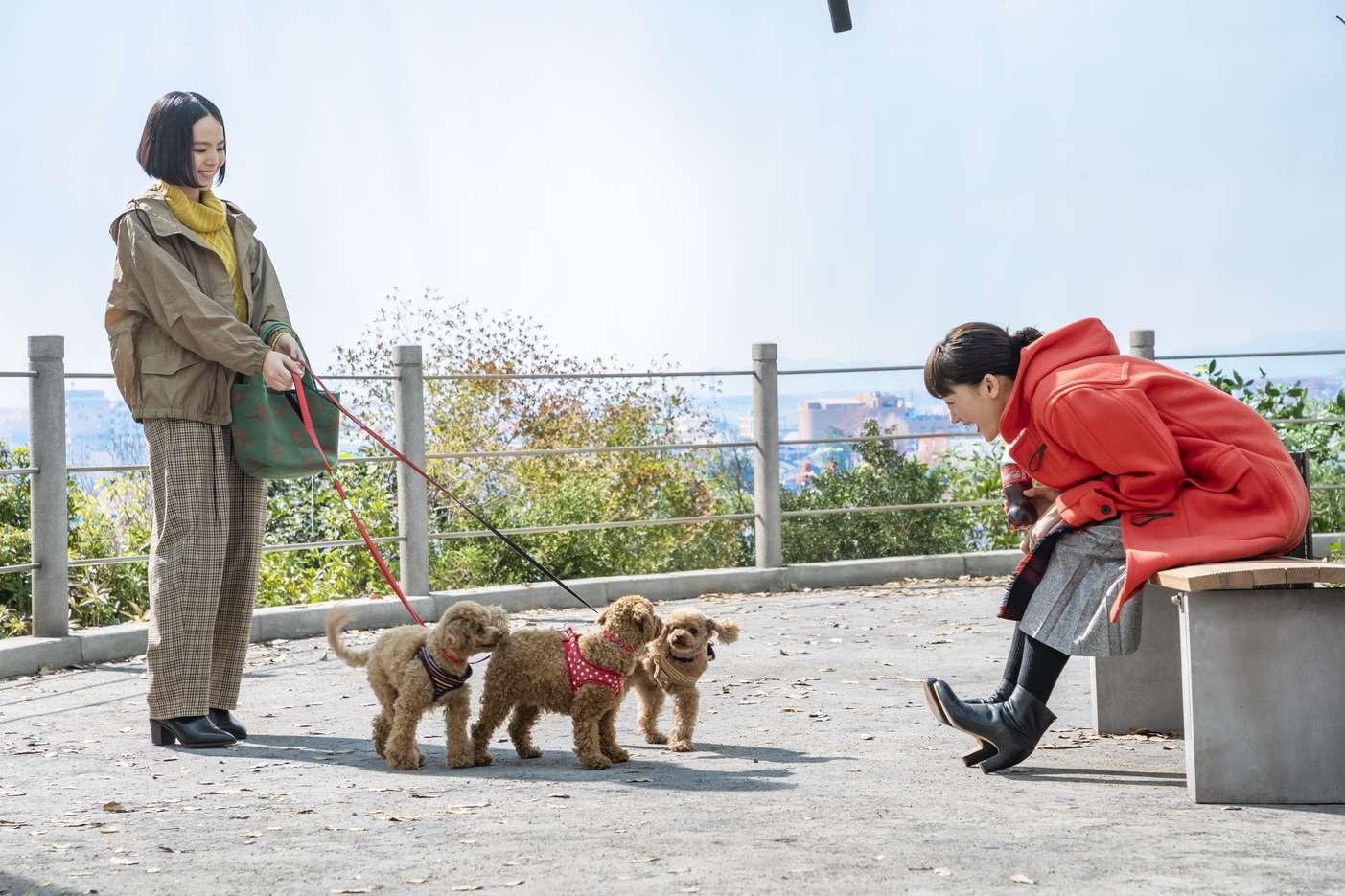 綾瀬はるか(女優)犬の散歩/コカ・コーラCM 2019年1月